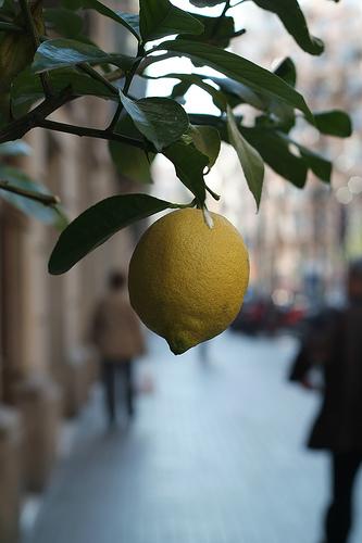 Lemon_tree_street